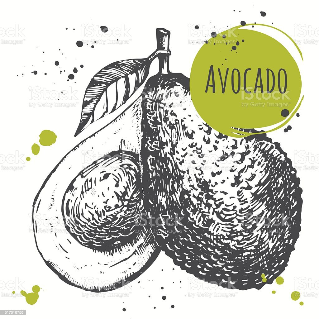 Avocado. Hand drawn fresh organic vegetables. Vegan food. vector art illustration