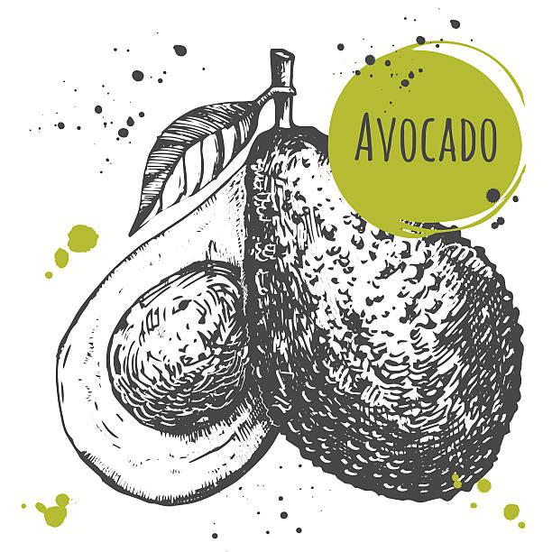Avocado. Hand drawn fresh organic vegetables. Vegan food. vector art illustration