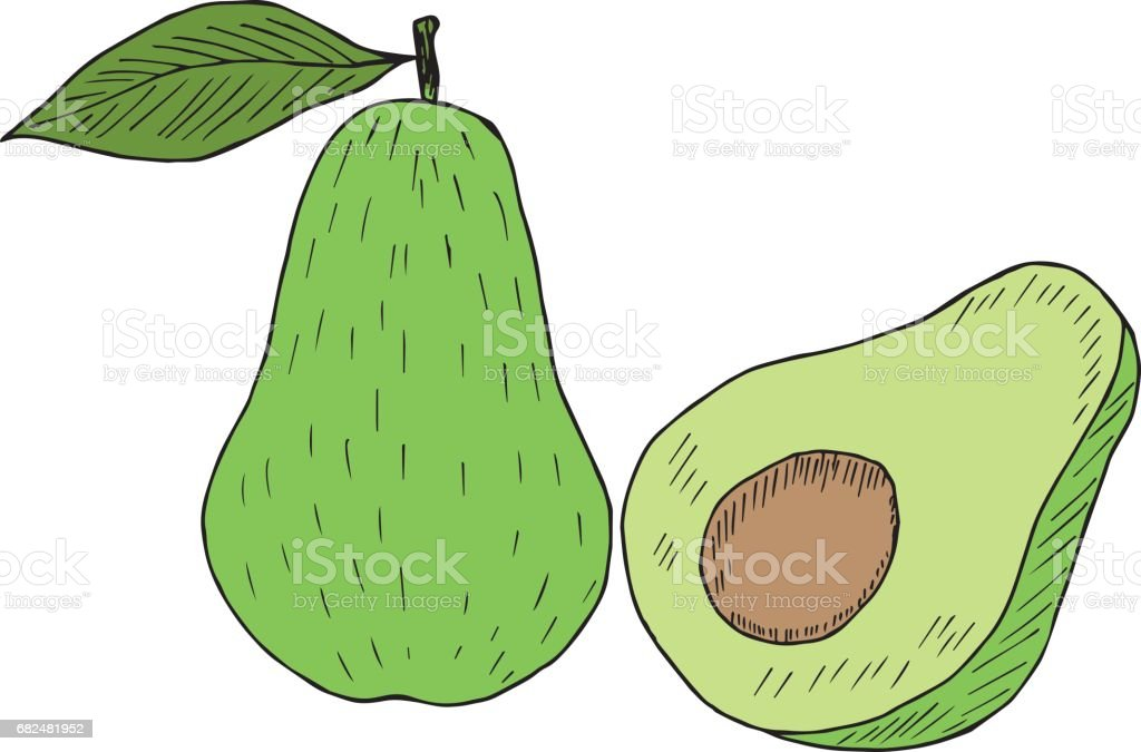 renkli avokado kroki royalty-free renkli avokado kroki stok vektör sanatı & avokado'nin daha fazla görseli