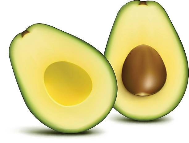 Avocado sliced A cut open avocado with isolated white background avocado stock illustrations
