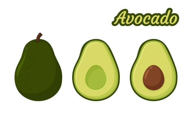 Avocado Vector. Healthy fruit avocado That was cut in half until the seed could be seen inside. Avocado Vector. Healthy fruit avocado That was cut in half until the seed could be seen inside. avocado stock illustrations