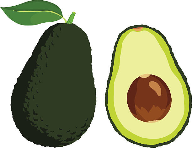 Avocado Vector illustration of fresh avocado.  avocado stock illustrations