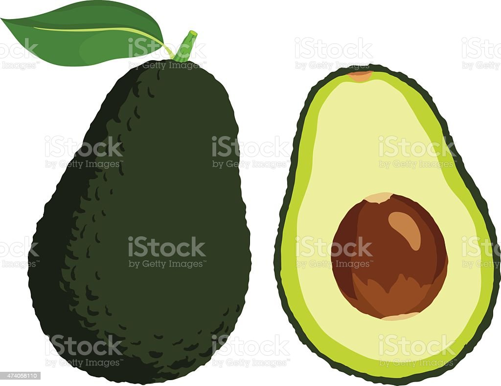 Avocado vector art illustration