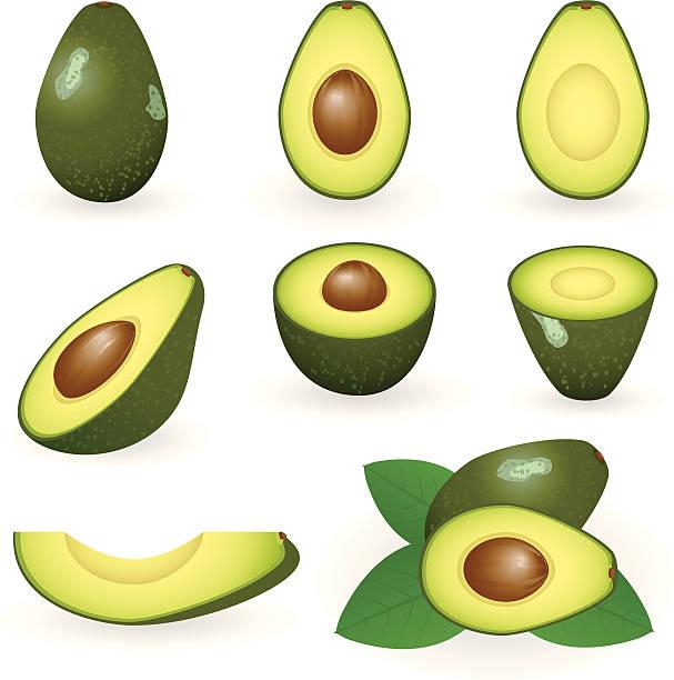 Avocado vector art illustration