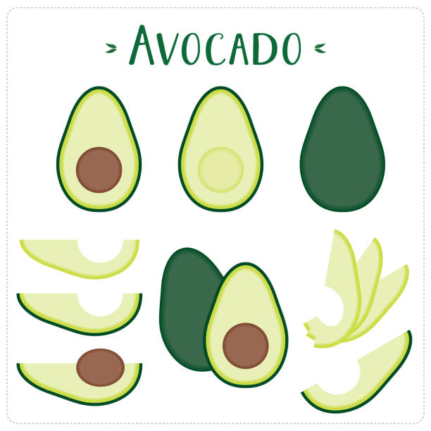 illustrazioni stock, clip art, cartoni animati e icone di tendenza di avocado vector illustration - avocado