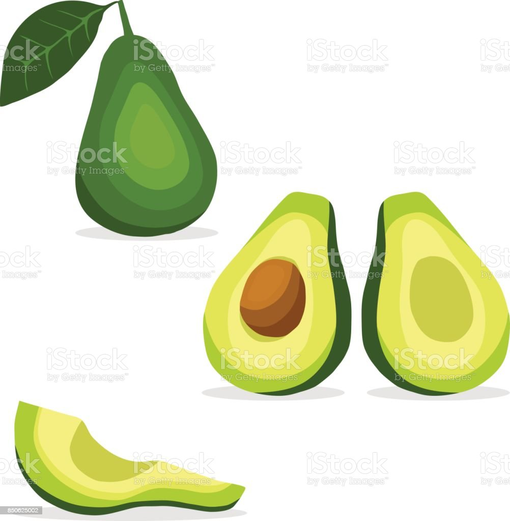 Avocados, avocado icon, tropical fruit. vector art illustration