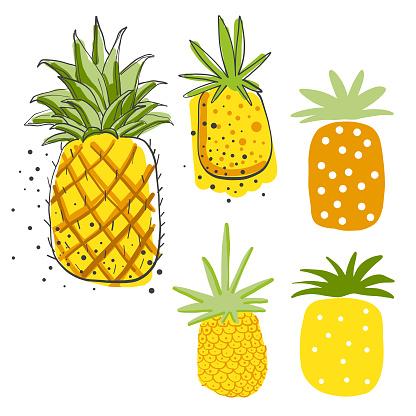 Avocados pencil drawings