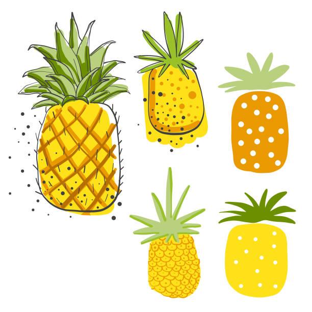 illustrazioni stock, clip art, cartoni animati e icone di tendenza di avocados pencil drawings - ananas