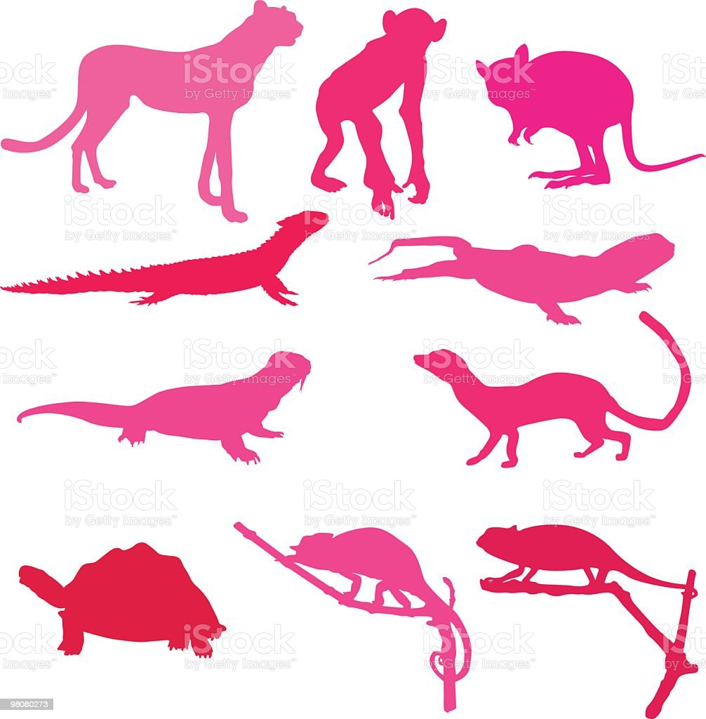 Awesome collection of animals royalty-free awesome collection of animals stock vector art & more images of animal