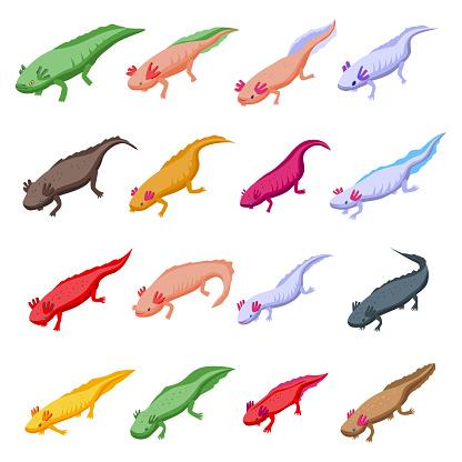 Axolotl icons set, isometric style