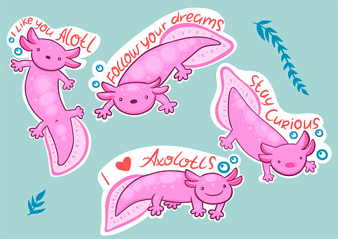 Axolotl stickers with inscriptions stay curious, i like you alotl, follow your dream, i love axolotls.Vector graphics.