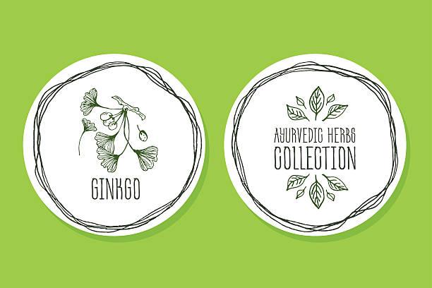 Ayurvedische Kräuter-Produkten und ginkgo – Vektorgrafik