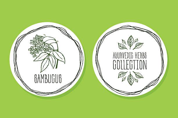 ayurvedische kräuter-produkt label mit sambucus - holunderstrauch stock-grafiken, -clipart, -cartoons und -symbole