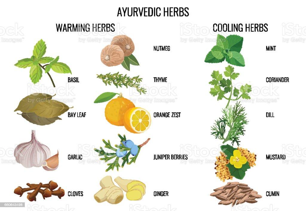 Ayurvedic warming and cooling herbs banner vector art illustration