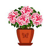 Azalea hoseplant with pink flowers in pot, vector icon