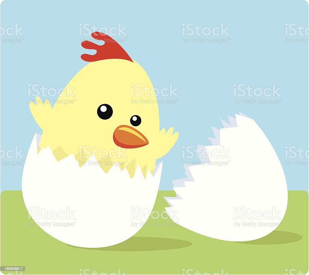 Baby Chicken vector art illustration