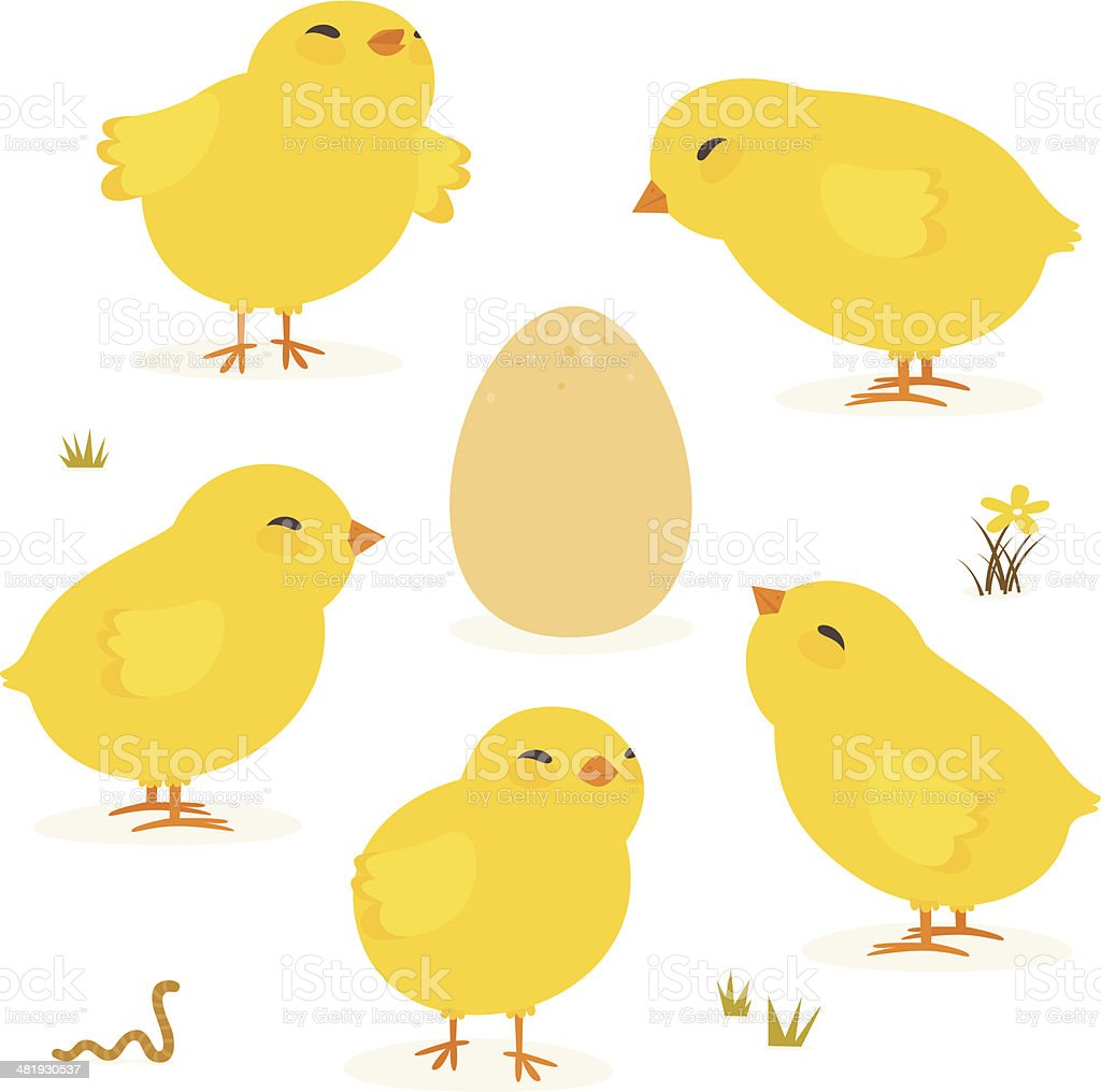 Baby chickens and Egg vector art illustration