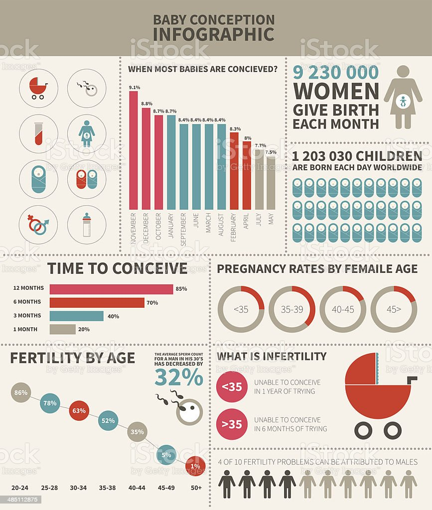 Baby conception infographic vector art illustration