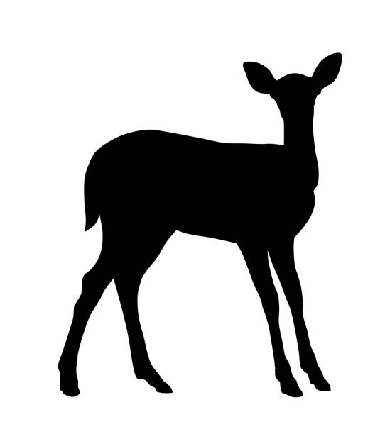 baby hirsch - reh stock-grafiken, -clipart, -cartoons und -symbole