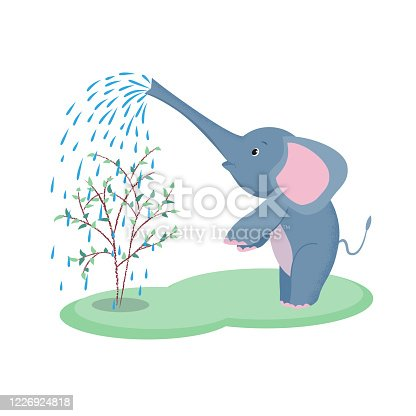 Baby elephant is watering a tree