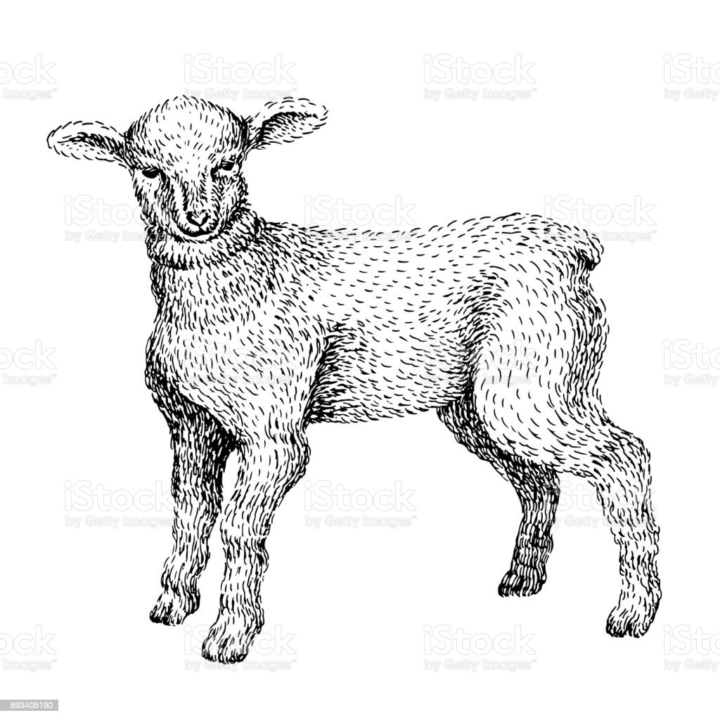 Baby Farm Animal Domestic Little Cute Lamb Vintage Style Vector Illustration