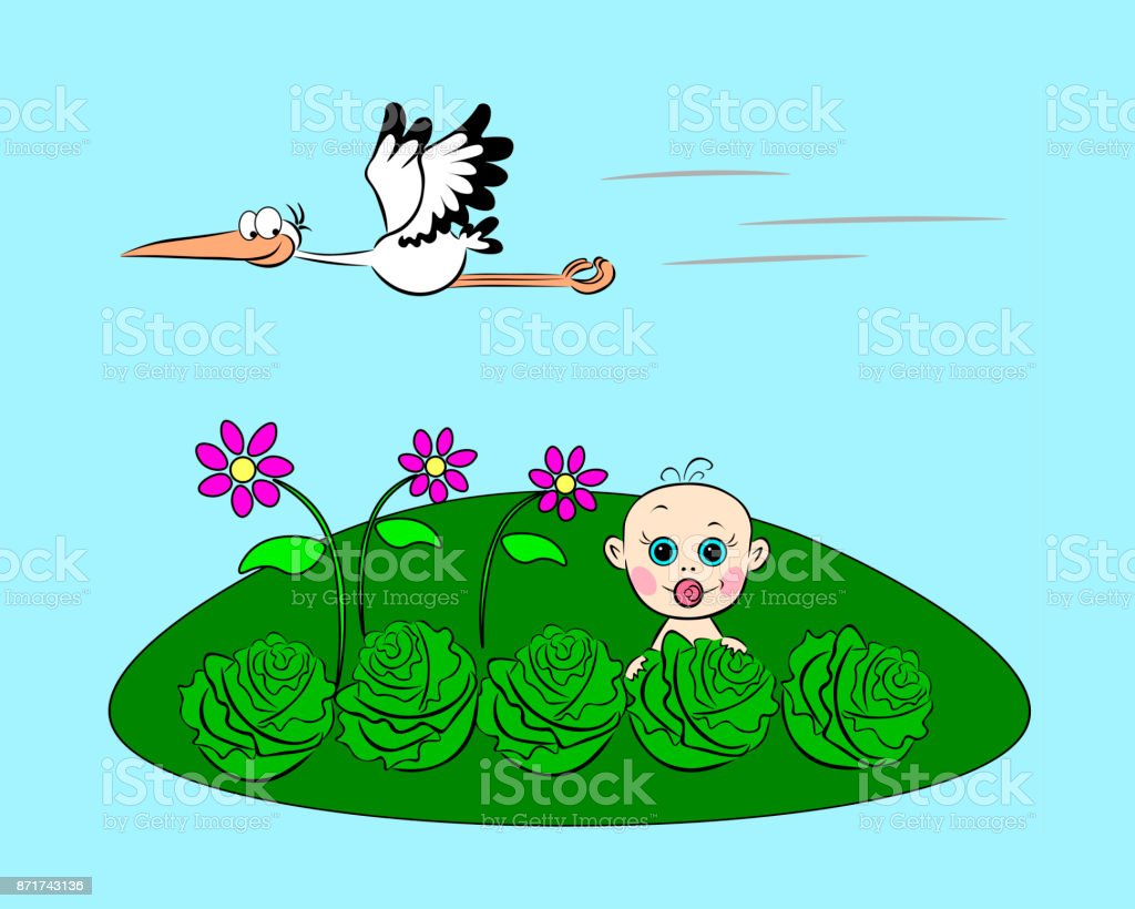 baby in cabbage vector art illustration
