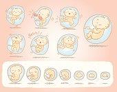 Baby inside womb