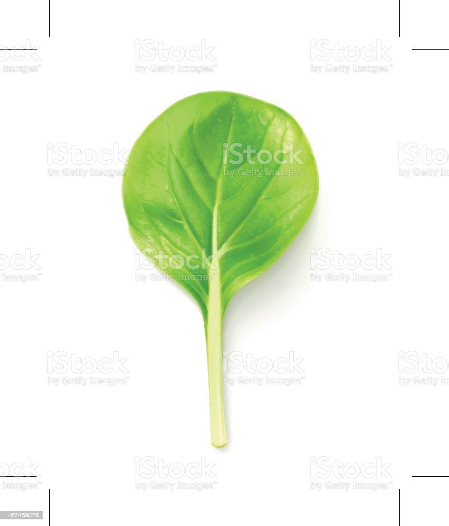 Baby leaf salad, vector illustration vector art illustration