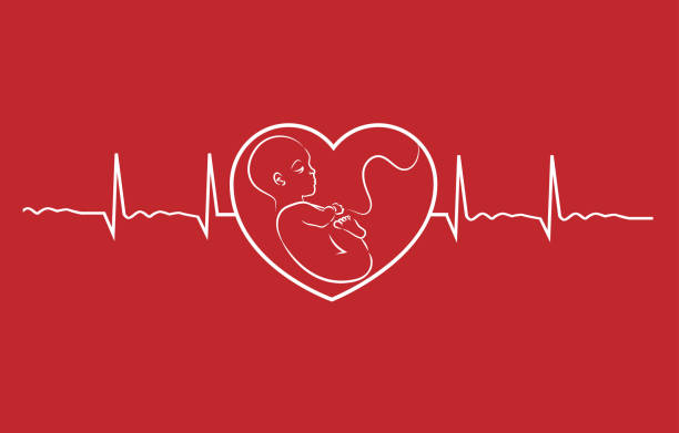 Baby on heart concept linear design vector. Heart beat graph of a pregnant woman. Baby on heart concept linear design vector. Heart beat graph of a pregnant woman. uterus stock illustrations