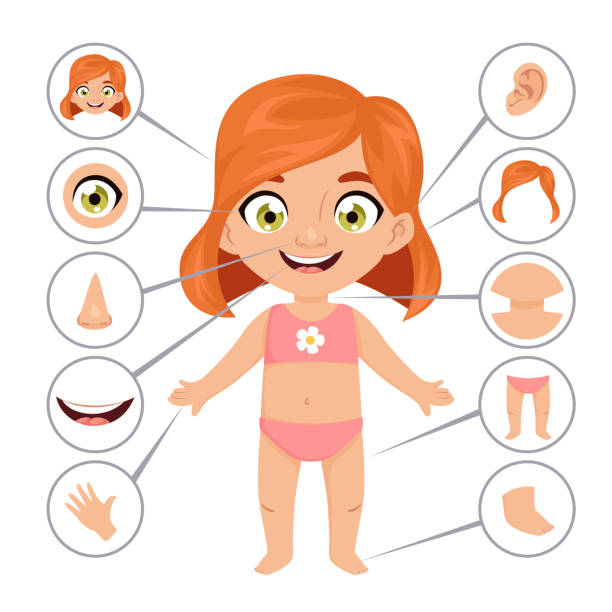 plakat edukacyjny dla niemowląt lub dzieci - ludzkie części ciała stock illustrations