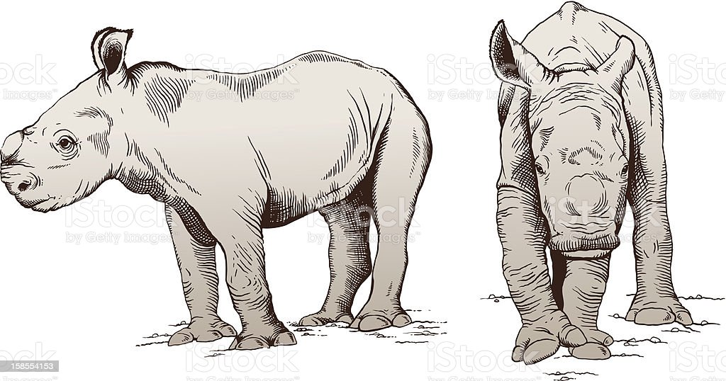 Baby Rhinos vector art illustration