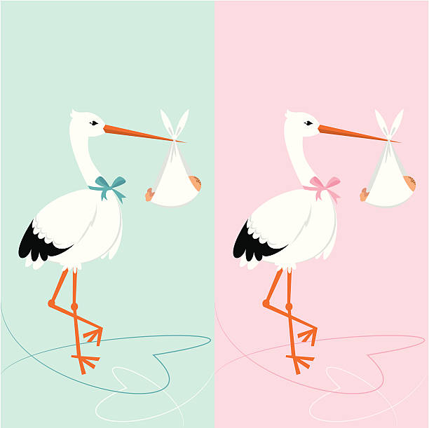 Baby shower invitation - stork with newborn Stork with newborn. BBaby shower invitation. Boy and girl. it's a girl stock illustrations