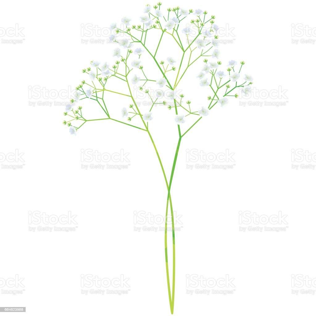 赤ちゃんの呼吸 - 水彩ペイントの模様の誕生花ベクトル図 ベクターアートイラスト