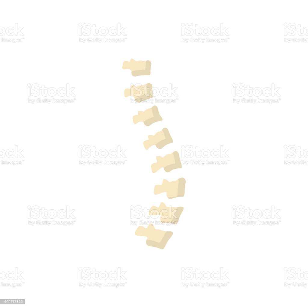 Erfreut Zurück Knochen Bilder - Anatomie Ideen - finotti.info