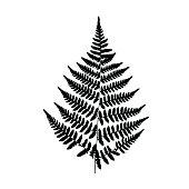 Background black-and-white fern