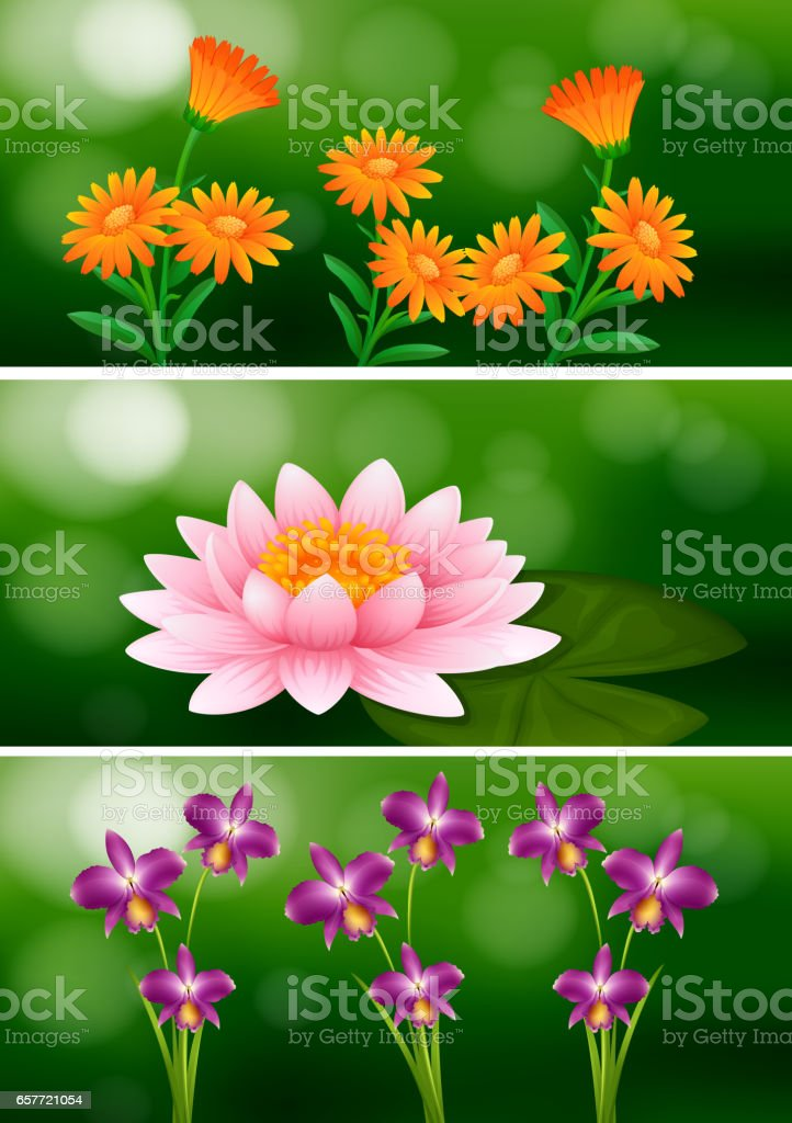 Background design with different types of flowers stock vector art background design with different types of flowers royalty free stock vector art mightylinksfo
