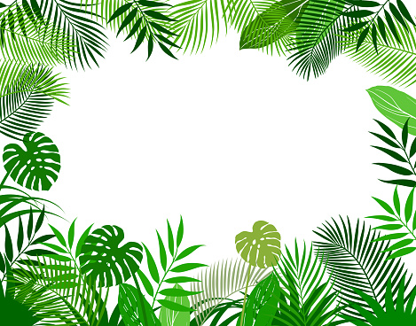 Background frame of tropical plants
