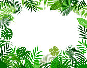 istock Background frame of tropical plants 1138972841