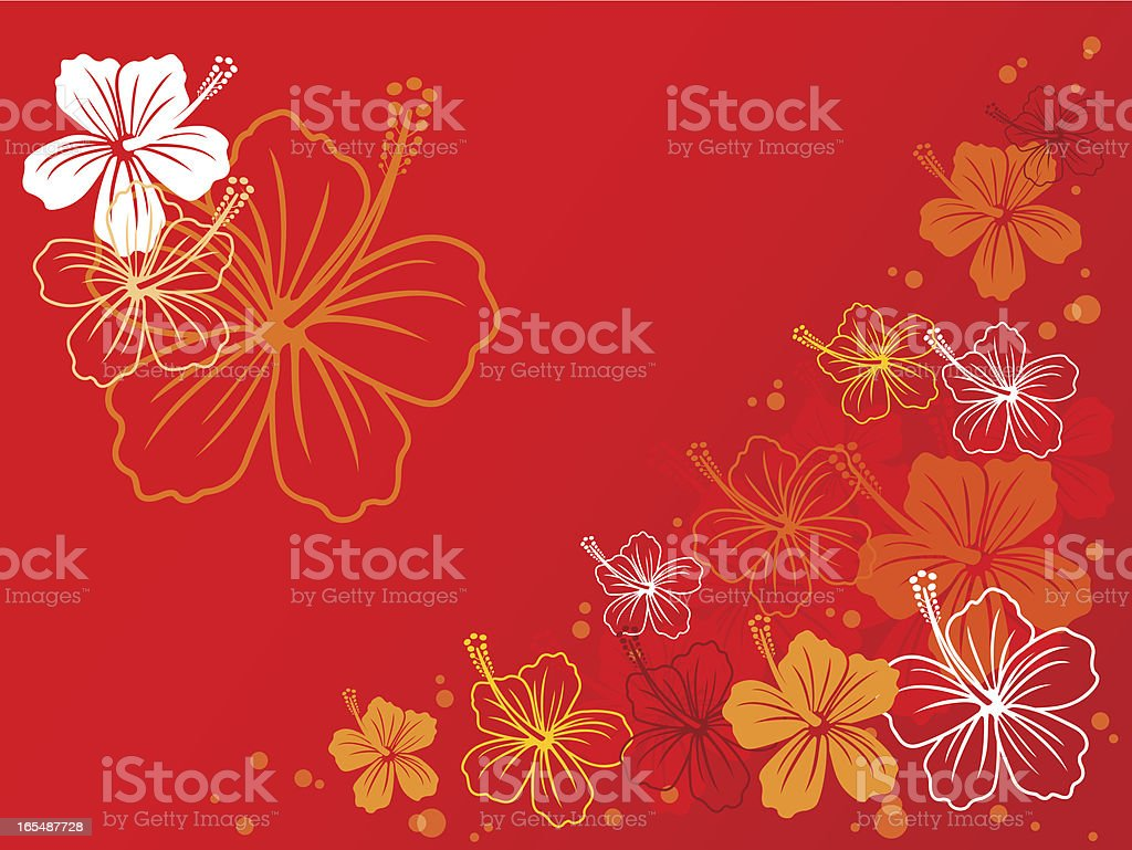 fondo hibiscus royalty-free stock vector art