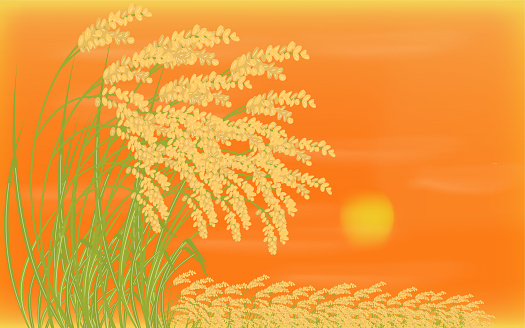 Background material, illustration of harvested rice and sunset