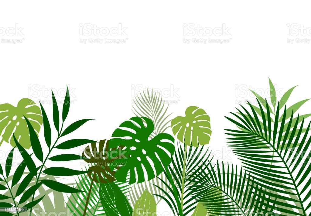 Background Material Of Tropical Plants Stock Illustration