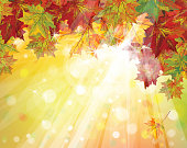 Background of autumn leaves and a golden sun shining down