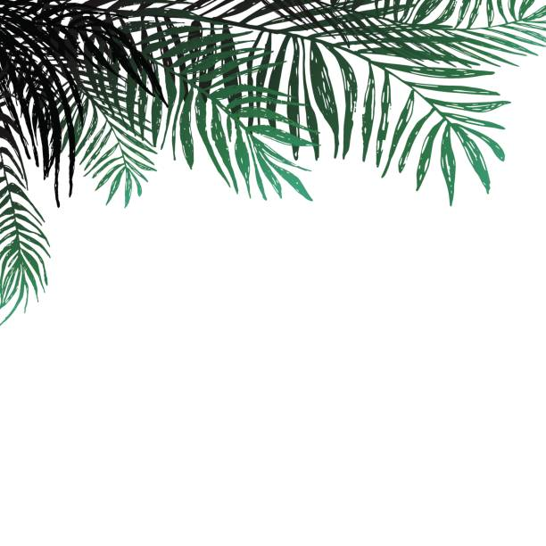 Royalty free palm tree leaves template silhouette clip art vector background of coconut twigs on white background palm trees vector botanical illustration elements pronofoot35fo Image collections