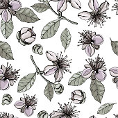 Background of feijoa flowers. Seamless pattern. Vector graphics.