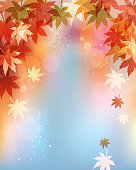 Autumn leaves, Nature,