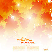 Background on autumn theme of falling yellow and orange maple leaves. Vector illustration.