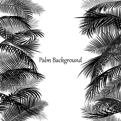 Background template with palm leaves. Minimalistic design. Border, frame with black branches of palm trees on a white background. Place for text. Vector tropical illustration.