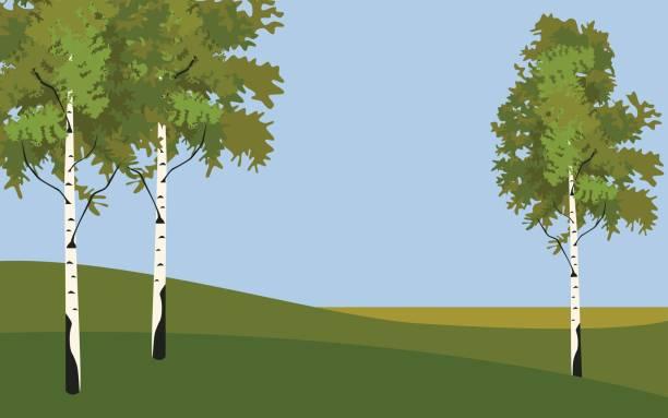 bildbanksillustrationer, clip art samt tecknat material och ikoner med bakgrunden trädet björk på våren - swedish nature