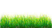 Background Vector Grass border, isolated on white