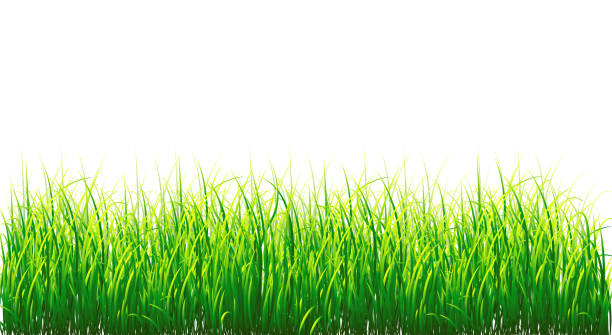 background vector grass border, isolated on white - grass stock illustrations